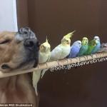 Pas, osam papagaja i hrčak petface