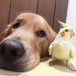 pas i drugari petface3