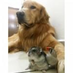 pas i drugari petface4
