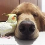 pas i drugari petface7