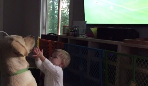 pas koji gleda fudbal petfac
