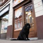 NOVI SAD: Otvorena prva pekara za pse!