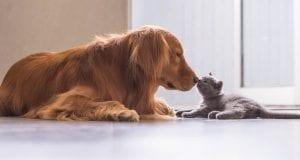 psi i mačke dobili ista prava kao i ljudi petface