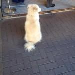 psi koji čekaju vlasnike petface.jpg10