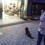 psi koji čekaju vlasnike petface.jpg11