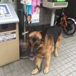 psi koji čekaju vlasnike petface.jpg13