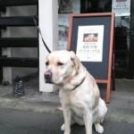 psi koji čekaju vlasnike petface.jpg14