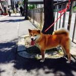 psi koji čekaju vlasnike petface.jpg15
