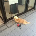 psi koji čekaju vlasnike petface.jpg18