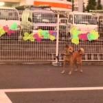 psi koji čekaju vlasnike petface.jpg1.6