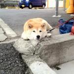 psi koji čekaju vlasnike petface