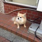 psi koji čekaju vlasnike petface.jpg4