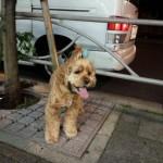 psi koji čekaju vlasnike petface.jpg5