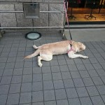 Psi koji čekaju vlasnike: 18 fotografija koje će vam reći NE OSTAVLJAJTE IH!