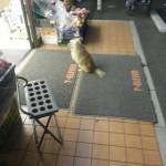 psi koji čekaju vlasnike petface.jpg9