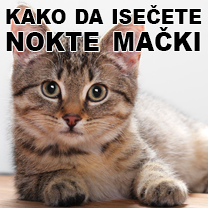 kako da isečete mački kandže petface