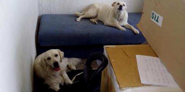 sa svoja dva psa živela u kartonskom zaklonu petface