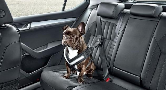 sigurnosni pojas za pse petface