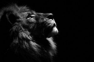 srpski fotograf počeo da slika životinje petface