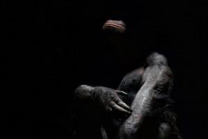 srpski fotograf počeo da slika životinje petface10