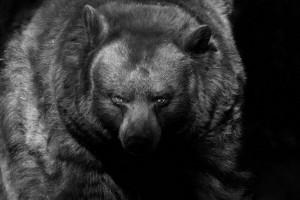 srpski fotograf počeo da slika životinje petface2