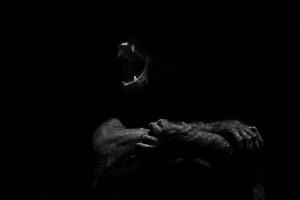 srpski fotograf počeo da slika životinje petface4