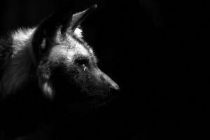 srpski fotograf počeo da slika životinje petface8