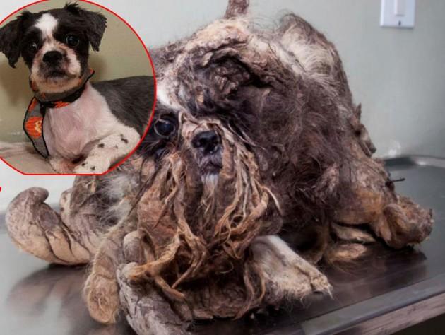 transformacija uličnog psa petface