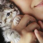 Ovo morate znati, pre nego što udomite mačku!