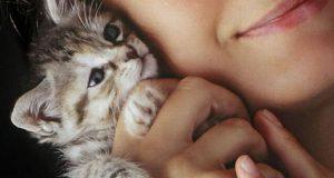 udomite mačku petface