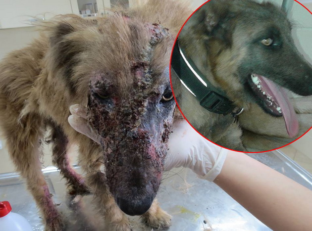 veterinar petface