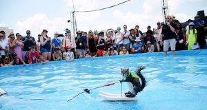 veverica šampion u skijanju na vodi petface