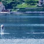 RAJ ZA OČI: Ples delfina oduševio posetioce Boke Kotorske (VIDEO)