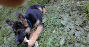 Baka i pas su najbolji prijatelji petface