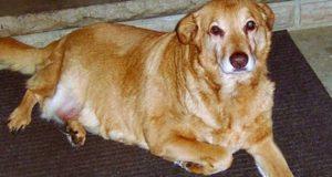 pas koji je pronašao svoju porodicu petface