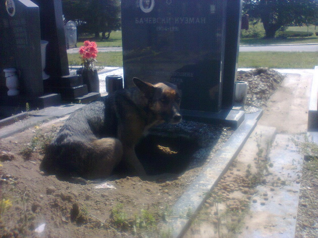 Grob u kome pas leži petface