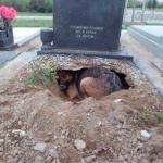 DRUGA STRANA PRIČE: Pas NE LEŽI na grobu preminulog vlasnika. Već…