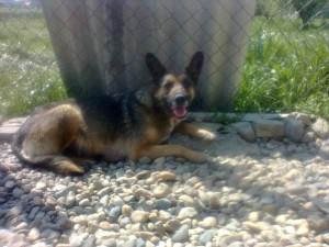 DRUGA STRANA PRIČE: Pas NE LEŽI na grobu preminulog vlasnika. Već...