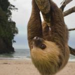 BRAVO, BRAVO: Kostarika najavila zatvaranje svojih zoo vrtova!