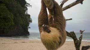 Kostarika najavila zatvraranje svojih zoo vrtova petface