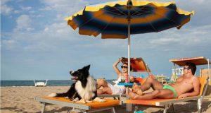 Kućni ljubimci na plaži petface