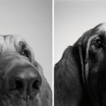 od šteneta do starog psa petface