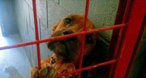 Pas koji plače u azilu petface