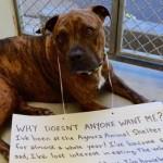 SLIKA KOJA JE RASTUŽILA SVE: Pas u azilu odbija da jede, jer ga niko ne želi!