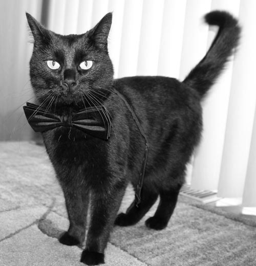 dan crnih mačaka petface