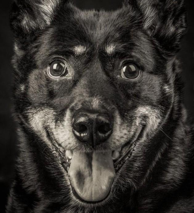 Slikala sam stare pse petface