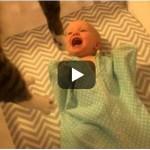 Susret bebe i mačke, koji je pogledao skoro 3 miliona ljudi: UŽIVAJTE!