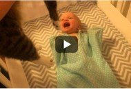 Susret bebe i mačke petface