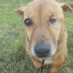 SUBOTICA: Pas, koji je 12 godina mahao repom u azilu, UDOMLJEN JE!