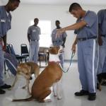 ŽIVOTNA LEKCIJA: Zlostavljači životinja u zatvorima MORAJU da brinu o napuštenim životinjama! (VIDEO)